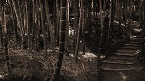 Bamboo Earth Forest 1920x1200 Wallpaper