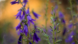 Purple Flower 6000x4000 Wallpaper