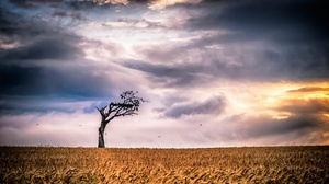 Cloud Field Lonely Tree Nature Sky Summer Tree Wheat 2048x1115 Wallpaper