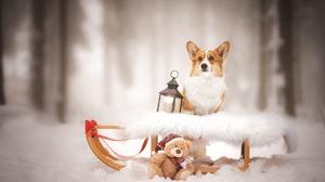 Corgi Dog Lantern Pet Sleigh Snow Teddy Bear Winter 2048x1365 Wallpaper
