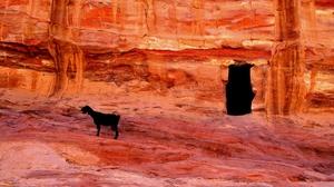 Animal Goat 2560x1440 wallpaper