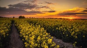 Field Sunset 3840x2160 wallpaper