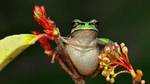Animal Frog 2048x1397 Wallpaper