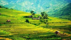 Nature Landscape Farm Rice Paddy Rice Fields 3076x1363 Wallpaper