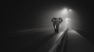 Black Amp White Elephant Lamp Post Night Road Wildlife 2560x1707 Wallpaper