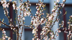 Tree Trunk Nature Branch Plants Spring Blossom Flowers 6000x4000 Wallpaper