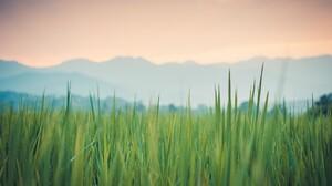 Grass Green Plants 1920x1080 Wallpaper