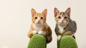 Cat Pet 2048x1280 Wallpaper