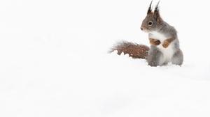 Rodent Snow Squirrel Wildlife 2400x1600 Wallpaper
