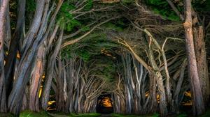 Canopy Road Tree Tree Lined 2048x1425 Wallpaper