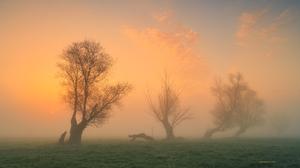 Roman Hudzik Landscape Mist Trees Nature Sky Grass Tree Stump Sunrise 2000x1333 wallpaper