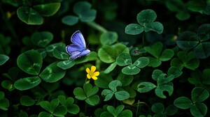 Butterfly Clover Greenery 3840x2400 Wallpaper