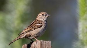 Bird Sparrow Wildlife 2048x1365 Wallpaper
