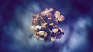 Earth Blossom 1920x1080 Wallpaper