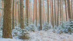 Forest Landscape Snow Trees Nature Isolation Fall 2048x1152 Wallpaper