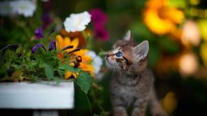 Pet Baby Animal Kitten Flower 2000x1333 Wallpaper