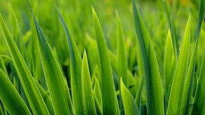 Green Grass 2560x1600 wallpaper