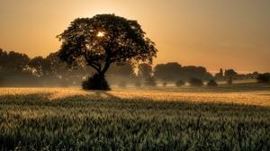 Field Nature Summer Sunrise Tree Wheat 2800x1867 Wallpaper