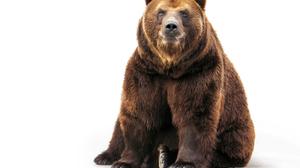 Animal Bear 4000x3000 wallpaper