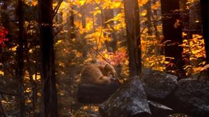 Fall Fox Sleeping Wildlife 2048x1636 wallpaper