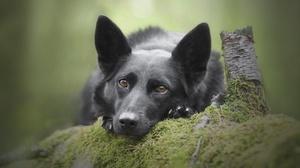 Dog Moss Pet 2048x1365 Wallpaper