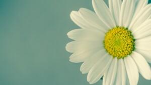 Close Up Daisy Flower White Flower 4899x3245 Wallpaper
