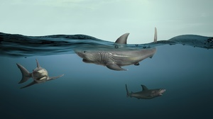 Fish Animals Shark Underwater 2048x1152 Wallpaper