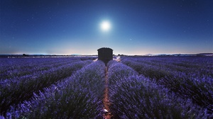 Field Lavender Night Plantation Stars 2000x1334 Wallpaper