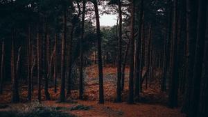 Pine Tree Fall 3840x2160 Wallpaper
