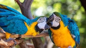 Macaw Parrot Bird 2250x1500 Wallpaper