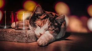 Cat Pet Sleeping 2951x1707 wallpaper