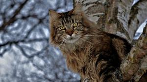 Cat Pet Stare 2048x1356 Wallpaper