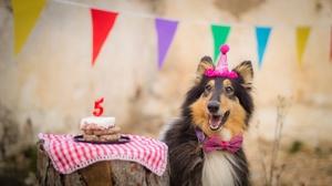 Birthday Dog Pet 2560x1702 Wallpaper