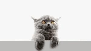 Cat Funny Pet 2400x1800 Wallpaper