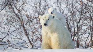 Snow Bear Wildlife Predator Animal Cub Baby Animal 2048x1365 Wallpaper