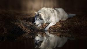 Dog Pet Reflection 1920x1280 wallpaper