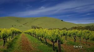 Man Made Vineyard 1920x1200 Wallpaper