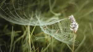 Arachnid Macro Spider Spider Web 5581x3721 Wallpaper