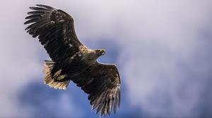 Bird Eagle Bird Of Prey 2047x1111 Wallpaper