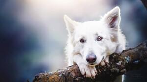 Animal Cute Dog Expression White 1920x1200 wallpaper
