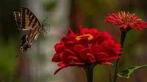 Butterfly Flower Insect Macro Red Flower 2048x1269 Wallpaper