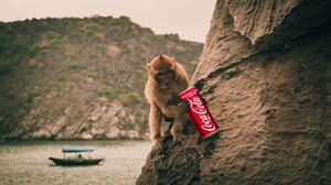 Monkey Coca Cola Island Boat Can Digital Art Photo Manipulation Animals 5456x3064 Wallpaper