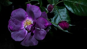 Flower Purple Flower 5184x3456 Wallpaper