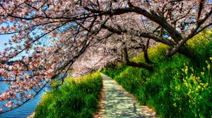 Blossom Earth Grass Hdr Park Path River Spring Tree 4285x2648 Wallpaper