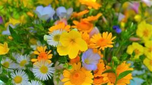 Daisy Earth Field Flower Spring Yellow Flower 3000x1929 Wallpaper