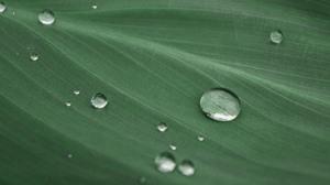 Leaves Water Macro Plants Water Drops Nature 6000x3444 Wallpaper