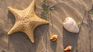 Sand Shell Starfish 6016x4016 Wallpaper
