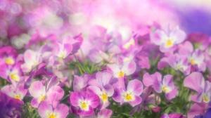 Close Up Flower Nature Pink Flower 2048x1365 Wallpaper