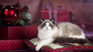 Christmas Pet 2048x1367 Wallpaper