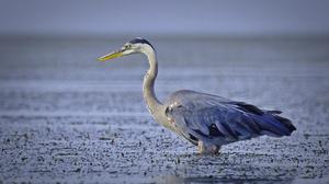 Bird Water Wildlife 2601x1524 Wallpaper